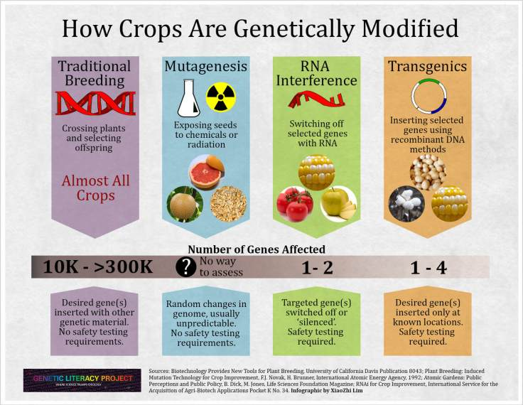 How crops are modified